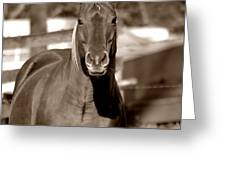A Horse Is A Horse II Greeting Card