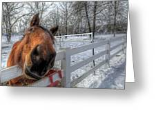 A Horse Is A Horse Greeting Card