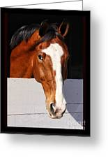 A Horse Is A Horse Of Course By Diana Sainz Greeting Card