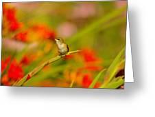 A Humming Bird Perched Greeting Card