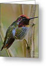 A Hummingbird Rainbow Greeting Card