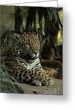 A Jaguar's Gaze Greeting Card
