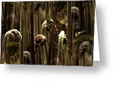 A Jungle Of Ferns Greeting Card