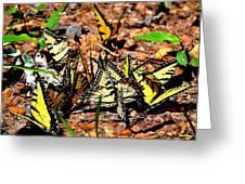 A Kaleidoscope Of Butterflies Greeting Card