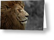 A King's Look Greeting Card