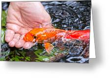 A Koi In The Hand Greeting Card