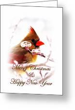 A Lady For Christmas - Cardinal Card Greeting Card