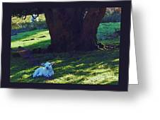 A Lamb In Wales Greeting Card