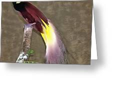A Large Bird Of Paradise Greeting Card