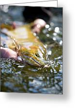 A Large Cutthroat Being Released Greeting Card