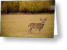 A Large Whitetail Buck Stairs Greeting Card