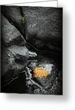 A Leaf On The Rocks Greeting Card