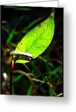 A Leaf... Greeting Card