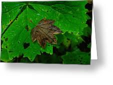 A Leaf Upon A Leaf Greeting Card