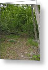 A Leisurely Stroll Through The Putnam County Veteran Memorial Park Woods Greeting Card