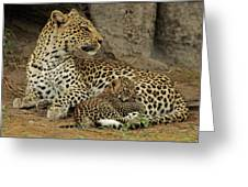 A Leopard Cub With Her Mother Greeting Card