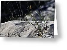A Light Spring Breeze Greeting Card by Gerlinde Keating - Galleria GK Keating Associates Inc