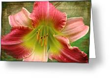 A Lily A Day Greeting Card