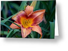 A Lily's Golden Heart Greeting Card