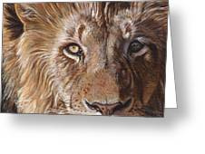 A Lion Face Greeting Card