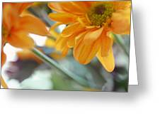 A Little Bit Sun In The Cold Time I Greeting Card