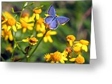 A Little Blue Greeting Card