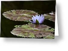 A Little Lavendar Water Lily Greeting Card