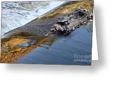 A Log Jams The Dam Greeting Card by Ilene Hoffman