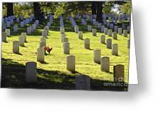 A Lone Remembrance Greeting Card