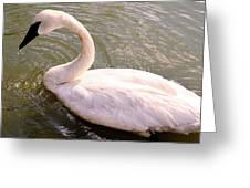 A Lone Swan Named Gracie Greeting Card