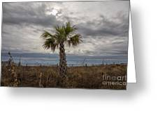 A Lonely Palm Tree Greeting Card