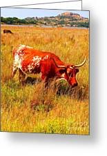 A Longhorn Greeting Card