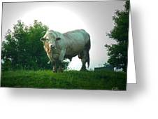 A Lot Of Bull Greeting Card