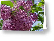 A Lovely Color Greeting Card