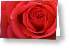 A Lovely Red Rose Greeting Card