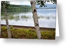 A Maine White Birch Pairing Greeting Card