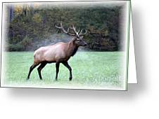A Majestic Elk Greeting Card