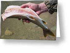 A Man Cleans A Lake Trout Fish Greeting Card