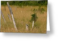 A Marsh In Maine Greeting Card