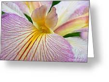 Iris  Metamorphosis Of The Iris Spring Equinox  Greeting Card