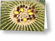 A Mexican Golden Barrel Cactus With Blossoms Greeting Card