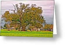 A Mighty Oak Greeting Card