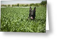 A Military Working Dog Sits In A Field Greeting Card by Stocktrek Images