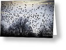A Million Birds Greeting Card