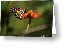 A Monarch Butterfly 1 Greeting Card