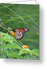 A Monarch Butterfly At Rest Greeting Card
