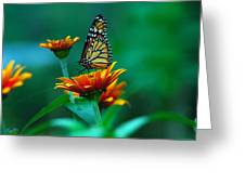 A Monarch Greeting Card