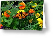 A Monarchs Colors Greeting Card
