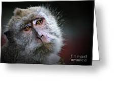 A Monkey's Look Greeting Card