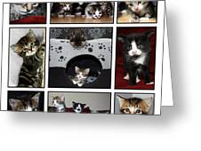 A Montage Of Kittens Greeting Card